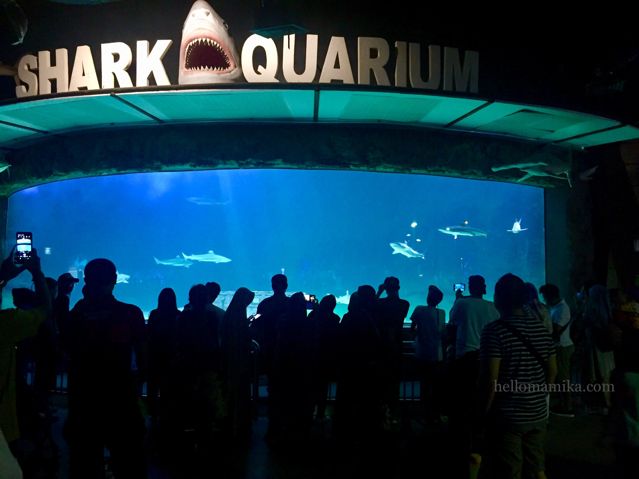 Shark aquarium seaworld ancol