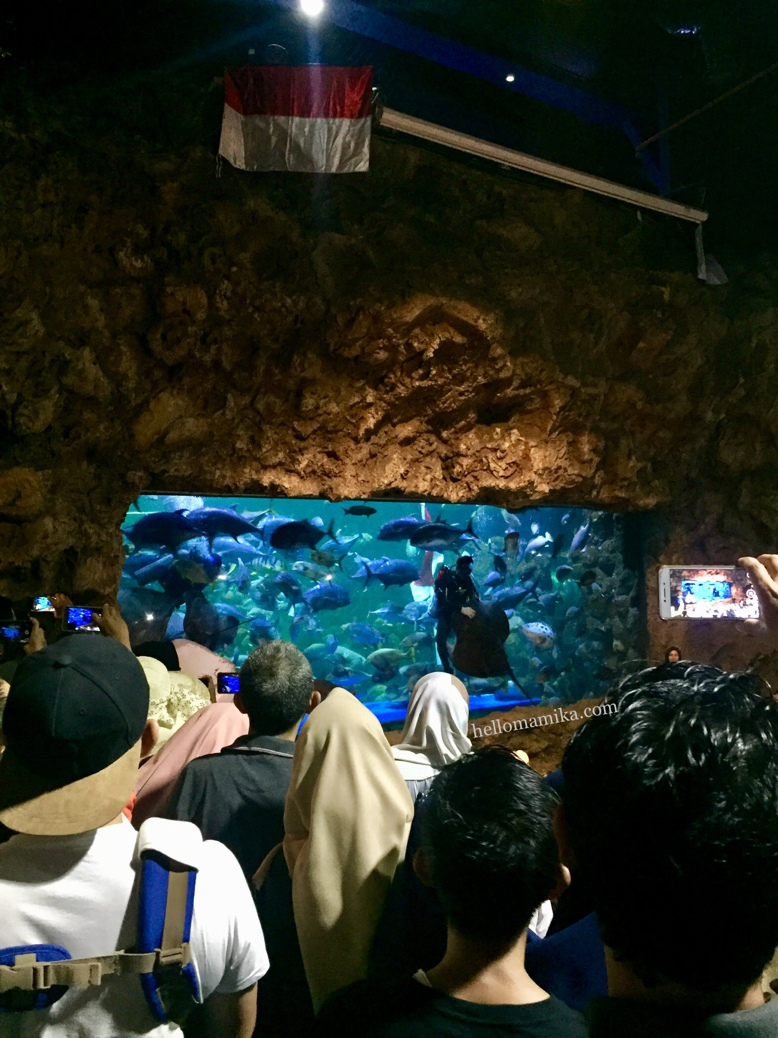 FEEDING SHOW SEA WORLD ANCOL