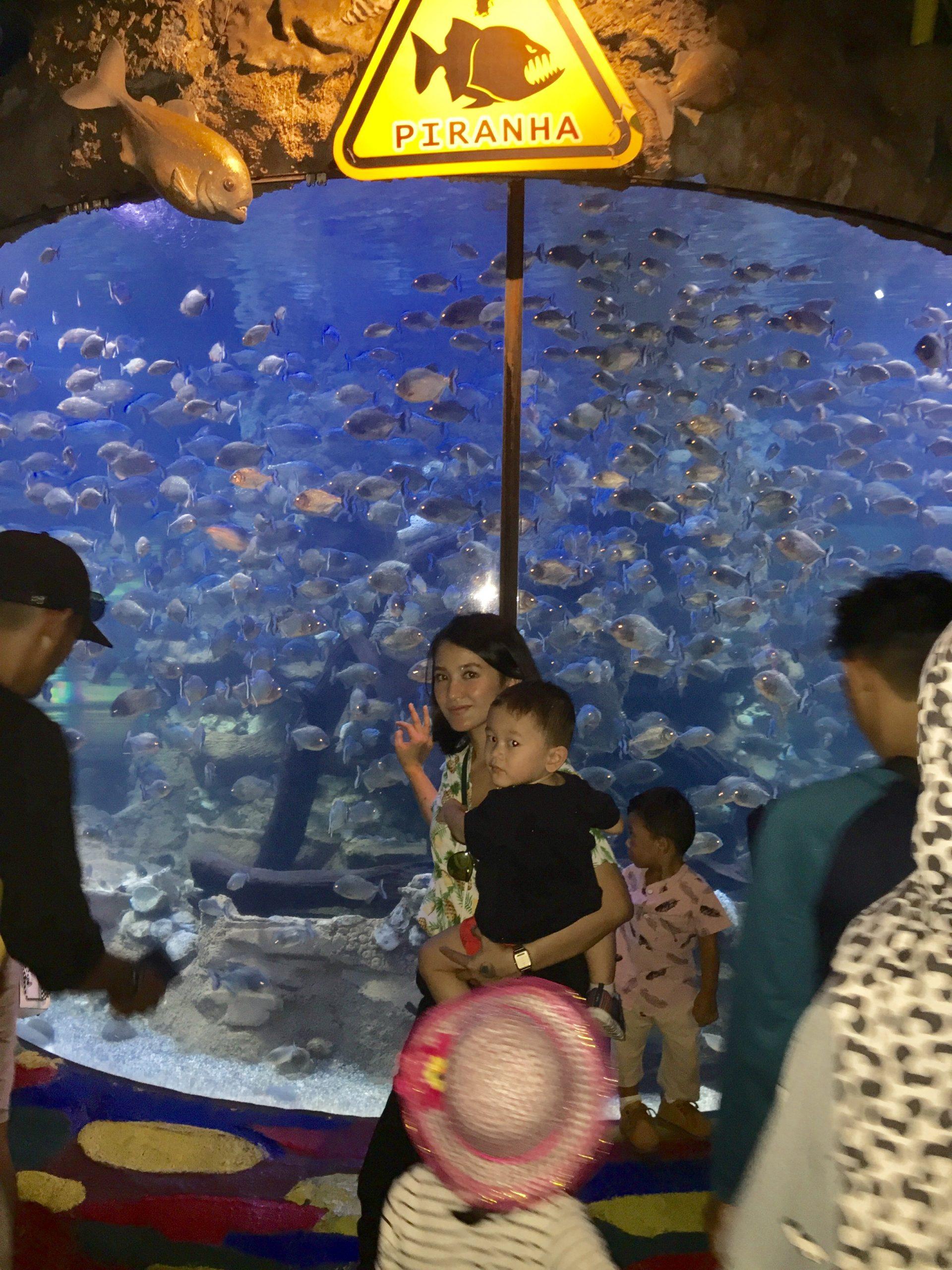 Piranha aquarium seaworld ancol